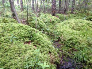Сфанговые болота