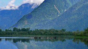 Телецкое озеро3