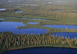 Болота Западной Сибири