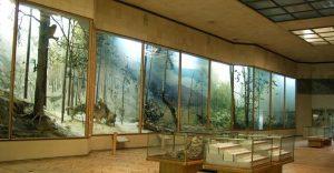 Ильменский музей