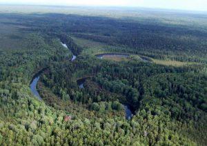 Тайга Томская область