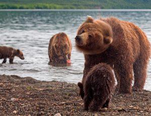 Животные Западной Сибири