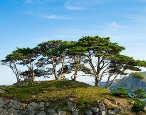 Дальневосточный морской заповедник деревья