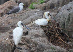 Дальневосточный морской заповедник птицы