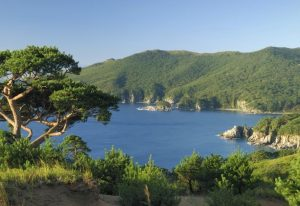 Дальневосточный морской заповедник растения