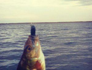 Иртяш рыбалка