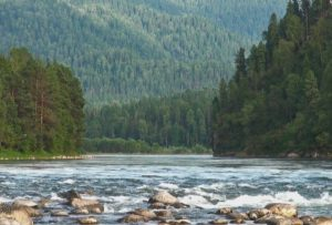 Берега реки Бия