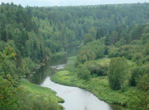 Растительность река Серга