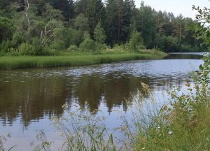 Река Серга отдых