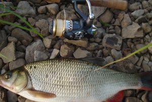 Река Серга рыбалка