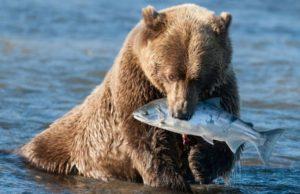 Байкал медведь