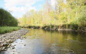 Река Сучан природа