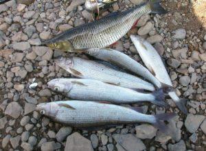 Рыбалка на Уссури