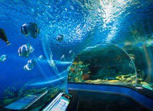 Остров Русский океанариум экспозиция