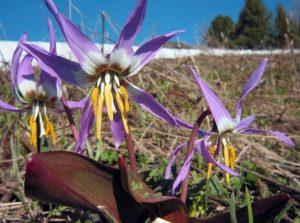 Катунский заповедник растительный мир