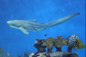Новосибирск зоопарк акула нянька
