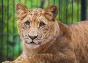 Новосибирск зоопарк животные
